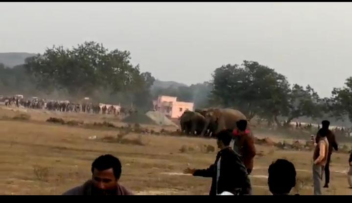गोरहर थाना क्षेत्र में जंगली हाथियों का झुंड पहुँचने से ग्रामीणों में फैला दहशत